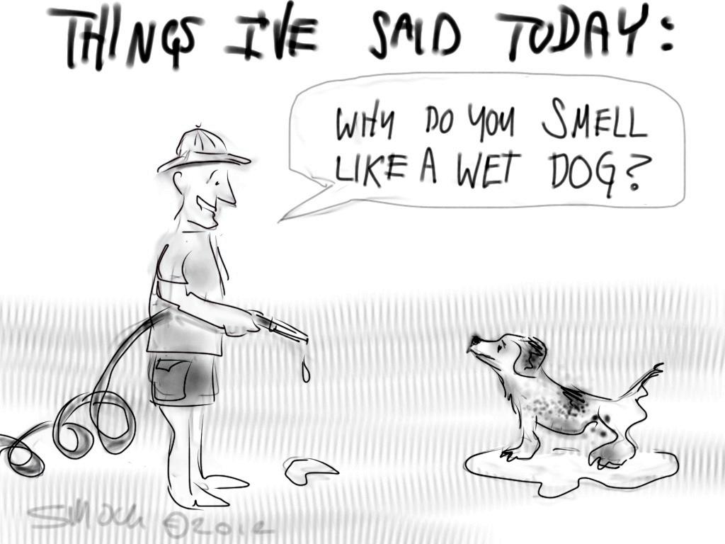 clipart wet dog - photo #44